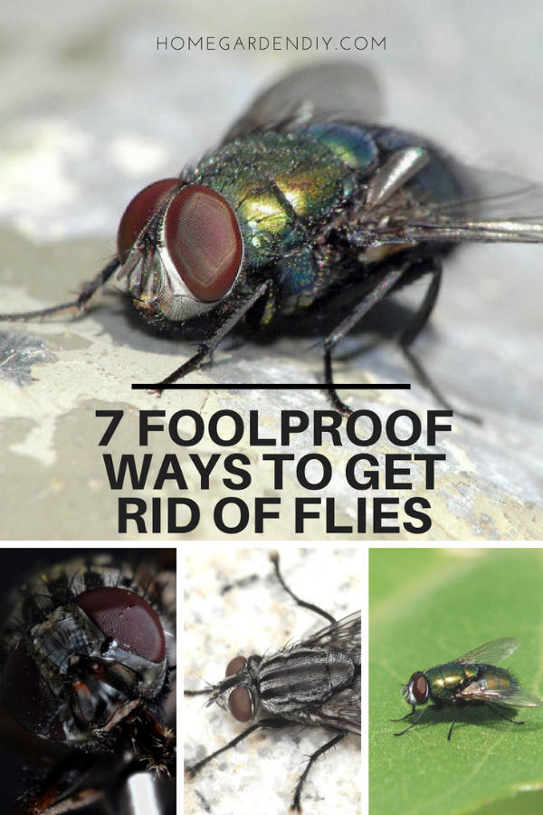 7 Foolproof Ways To Get Rid Of Flies