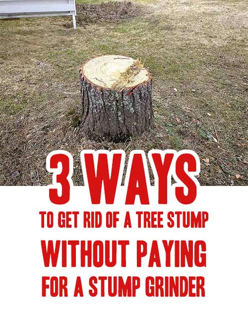 3 Ways To Get Rid Of A Tree Stump Without Paying For A Stump Grinder Home Garden Diy